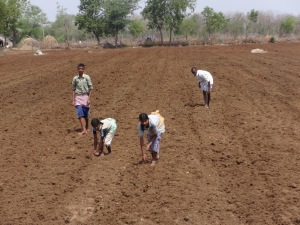 Students helping a local farmer in his field