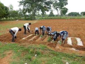 Students & teachers at work in a farmer's field